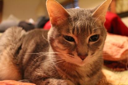 Grandcat, Squeaks.